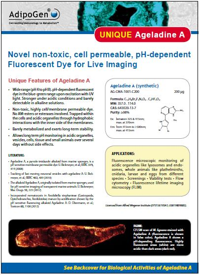 Ageladine A Product Flyer