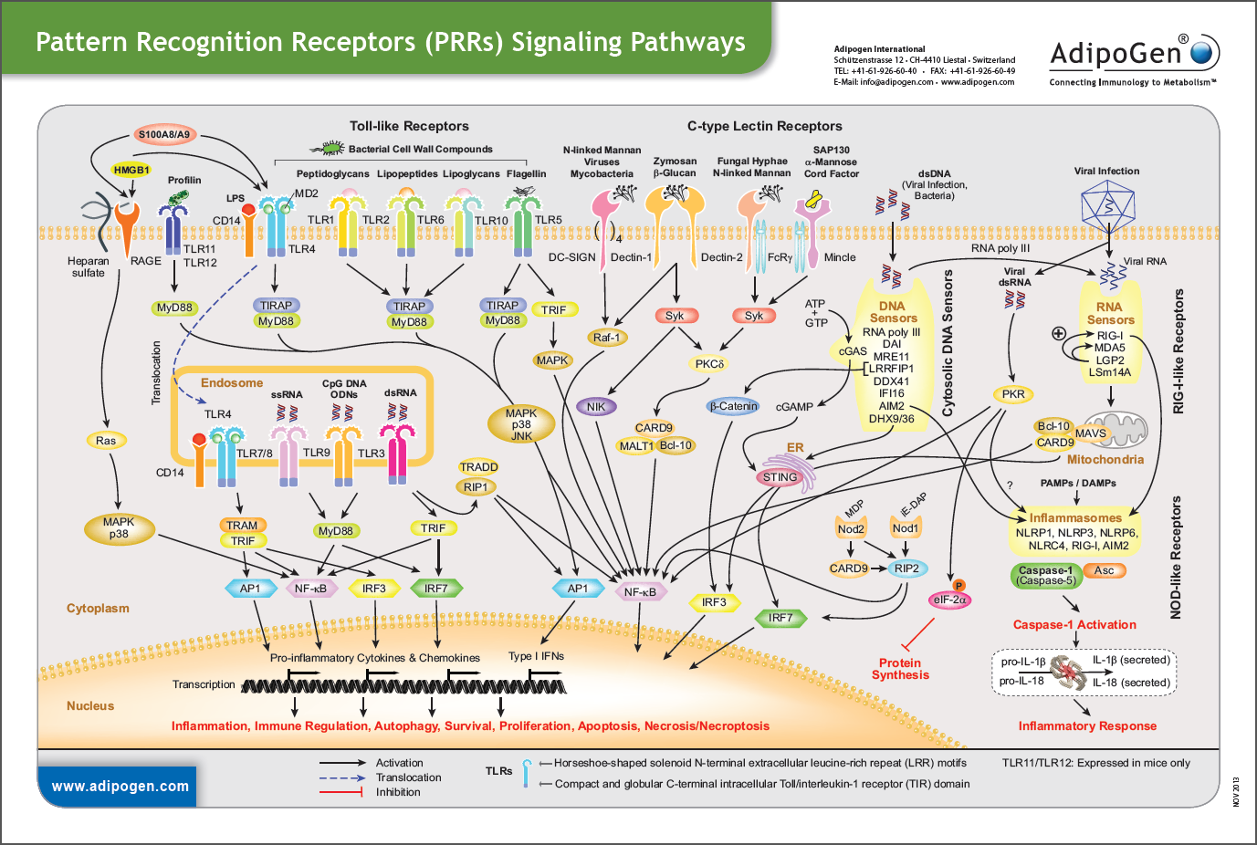 Pattern Recognition Receptors Signaling Wallchart 2013