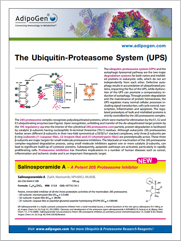 Proteasome Flyer