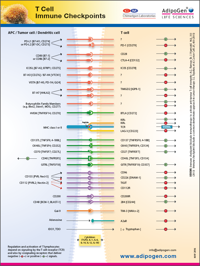 T Cell Immune Checkpoint Wallchart 2016