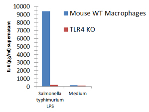 Macrophages from wild-type (WT) TLR4 expressing or TLR4 deficient (TLR4 KO) mice were stimulated with 1μg/ml TLRpure™ <i>S. typhimurium</i> S-LPS. Cell culture supernatants were analysed by ELISA for IL-6 after 24h. Optimal concentrations required for activation depend upon bacterial strain and chemotype (R- or S-) LPS, cell species (murine, human, others), cell culture conditions (FCS concentration), sampling time and cytokine. Recommended range for S-type (wild-type) LPS: 0.01-1.0μg/ml.